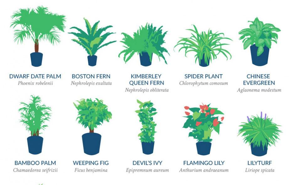 plantas-nasa1